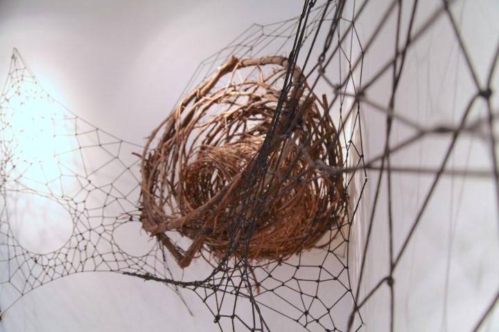 Installation Driftwood Web